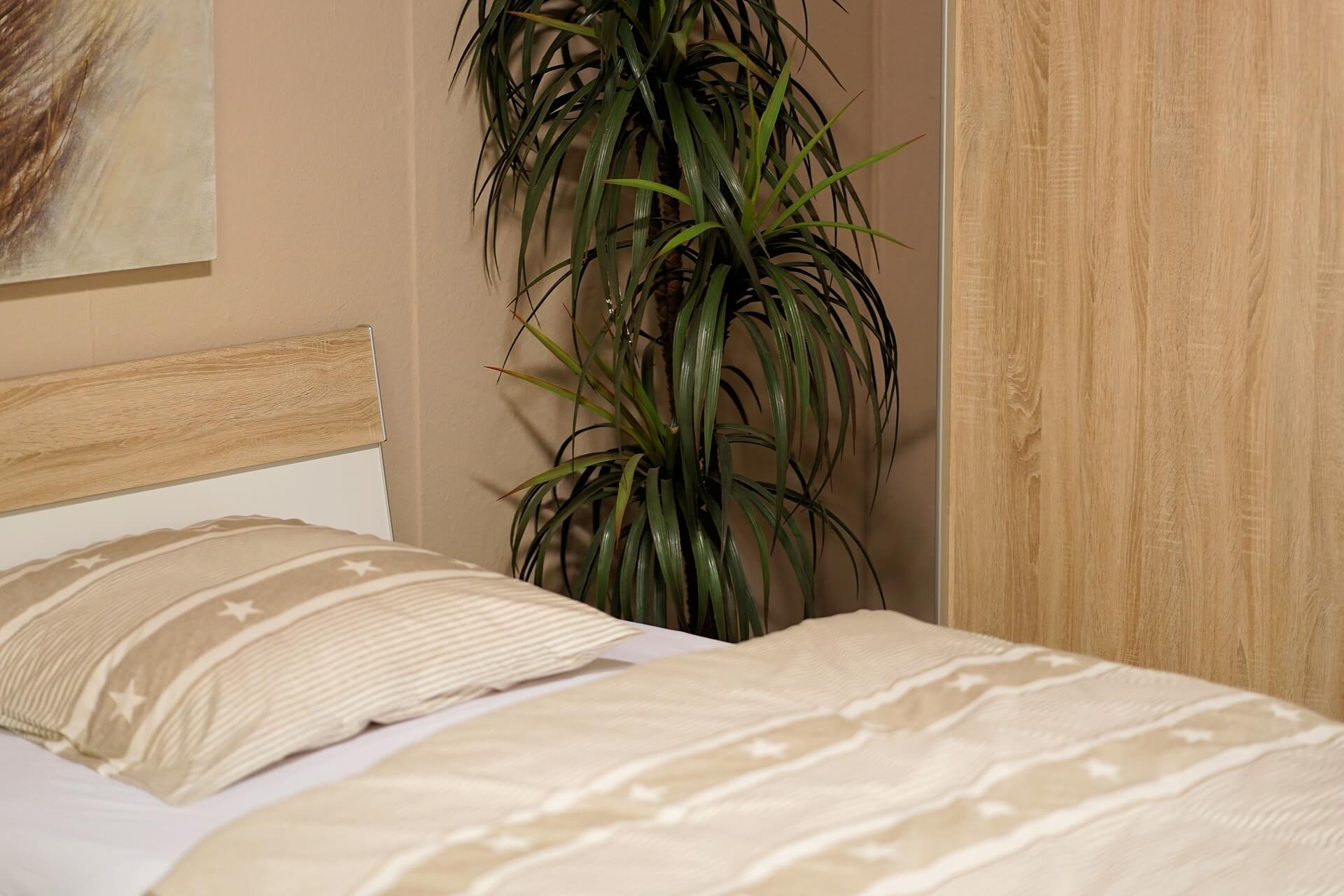 Pflanze im Schlafzimmer